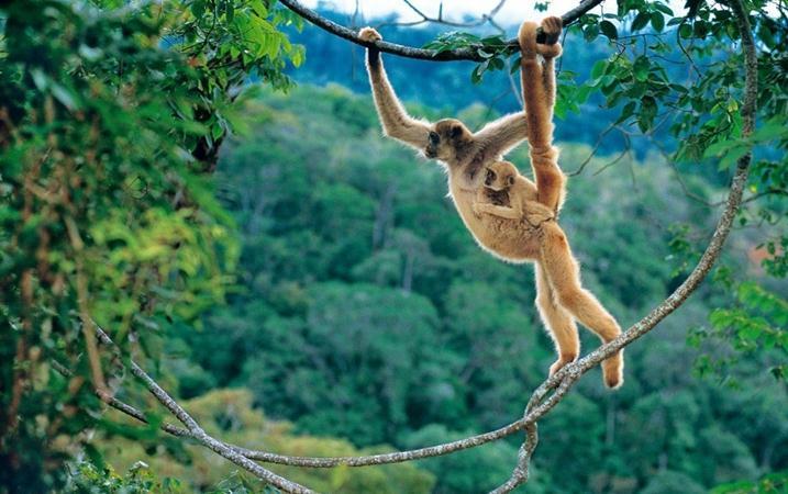Животные Бразилии