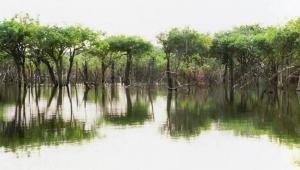 Леса Амазонии фото