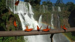 Водопад Игуасу фото