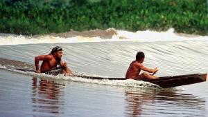 Основные занятия жителей северной Бразилии