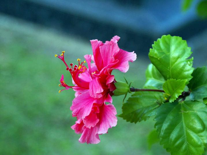 Растения Амазонии фото