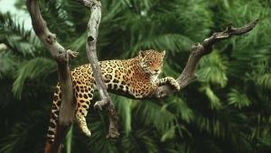 Природа Амазонии фото