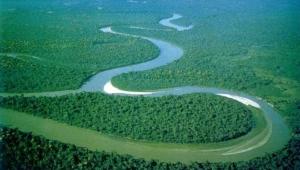 Леса Бразилии фото